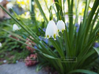 花の写真・画像素材[492328]