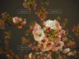 花の写真・画像素材[507161]
