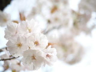近くの花のアップの写真・画像素材[1103995]