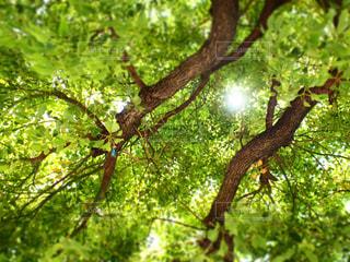 Greenの写真・画像素材[492576]