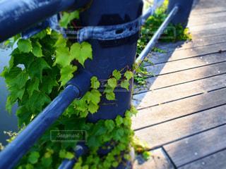 Greenの写真・画像素材[497338]
