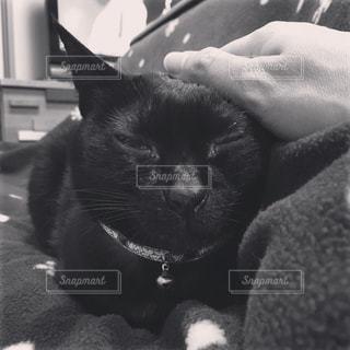 猫 - No.577000