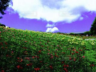 自然の写真・画像素材[502013]