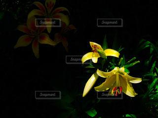 自然の写真・画像素材[502017]