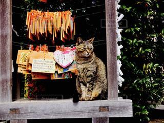 猫の写真・画像素材[502119]