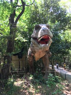 ティラノサウルスの写真・画像素材[492861]