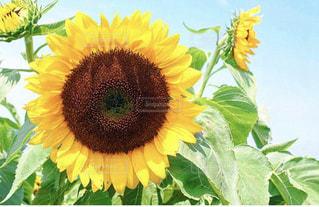 花の写真・画像素材[2238940]