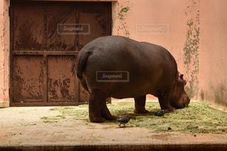 動物の写真・画像素材[495376]