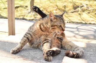 猫の写真・画像素材[495406]