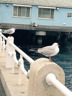 横浜の写真・画像素材[1065024]
