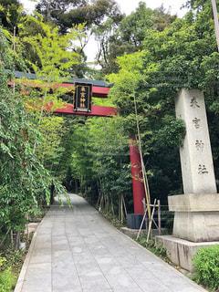 來宮神社の鳥居の写真・画像素材[2976910]