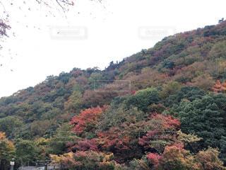 紅葉している山の写真・画像素材[4126174]