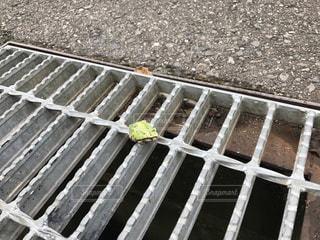 井から出た我が社のカエルの写真・画像素材[782147]