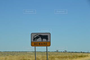 牛の写真・画像素材[540756]