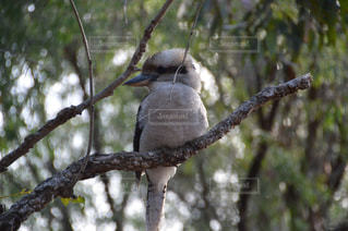 鳥の写真・画像素材[543036]