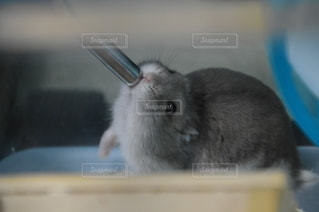 動物の写真・画像素材[2592879]