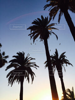 夕日の写真・画像素材[500355]