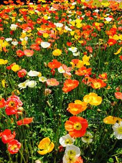 春の写真・画像素材[500357]