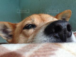 犬の写真・画像素材[494014]