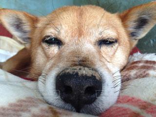 犬の写真・画像素材[494173]