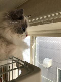 窓の前に座っている猫の写真・画像素材[1115919]