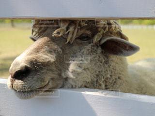 動物の写真・画像素材[494376]