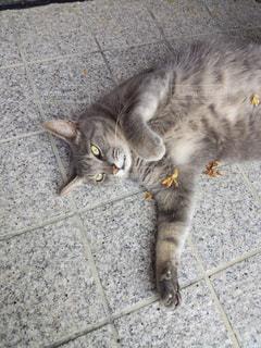 猫の写真・画像素材[502493]