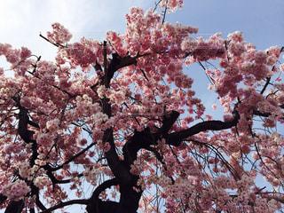 春の写真・画像素材[502494]