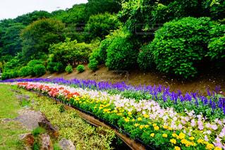 花の写真・画像素材[517603]