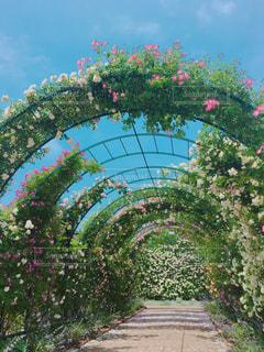 花の写真・画像素材[517604]