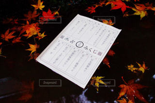 秋 - No.495091