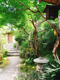 庭園の写真・画像素材[537254]