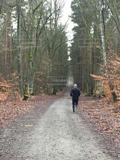 冬の静かな森をジョギングの写真・画像素材[987210]