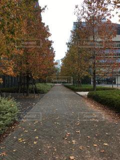 秋の写真・画像素材[495230]