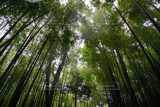 京都の写真・画像素材[495252]