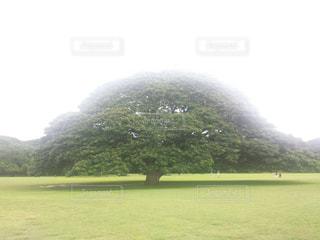 ハワイの写真・画像素材[495488]