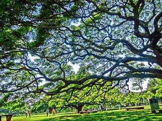 木の写真・画像素材[510200]