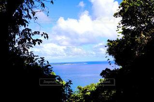 近くの木のアップの写真・画像素材[720339]