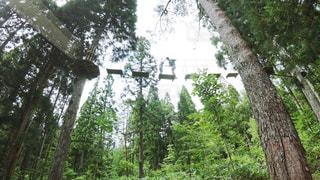フォレスト内のツリーの写真・画像素材[723737]