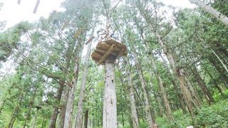 フォレスト内のツリー - No.723766
