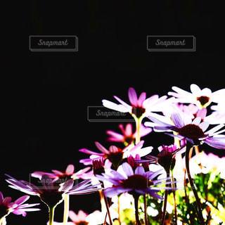 花の写真・画像素材[495749]