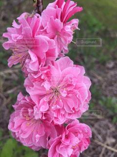 花の写真・画像素材[495680]