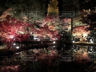 森の中のクリスマス ツリーの写真・画像素材[876000]