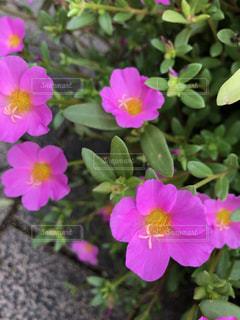 近くの花のアップの写真・画像素材[876003]