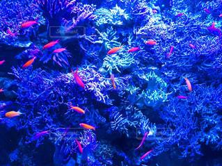 海の写真・画像素材[580362]