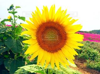 花の写真・画像素材[618899]