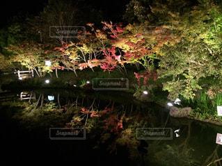 背景の水の庭の写真・画像素材[864270]
