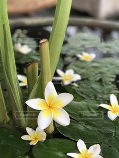 近くの花のアップの写真・画像素材[718060]