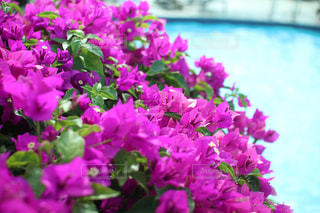近くに紫の花のアップの写真・画像素材[721773]
