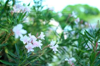 近くの花のアップ - No.721777